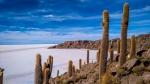 Isla Incahuasi - Salar de Uyuni